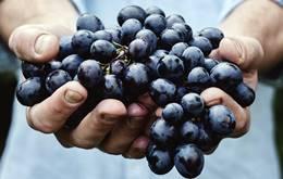 अंगूर के 10 फायदे